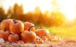 Activités-gratuites-octobre.png